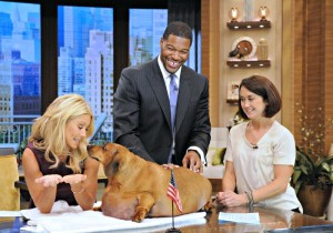 Kelly Ripa and Michael Strahan with overweight Dashund on Live! with Kelly and Michael